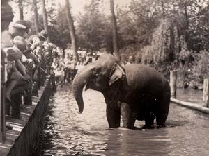 Elefant im m%c3%bchlenteich circus strassburger foto stadtarchiv